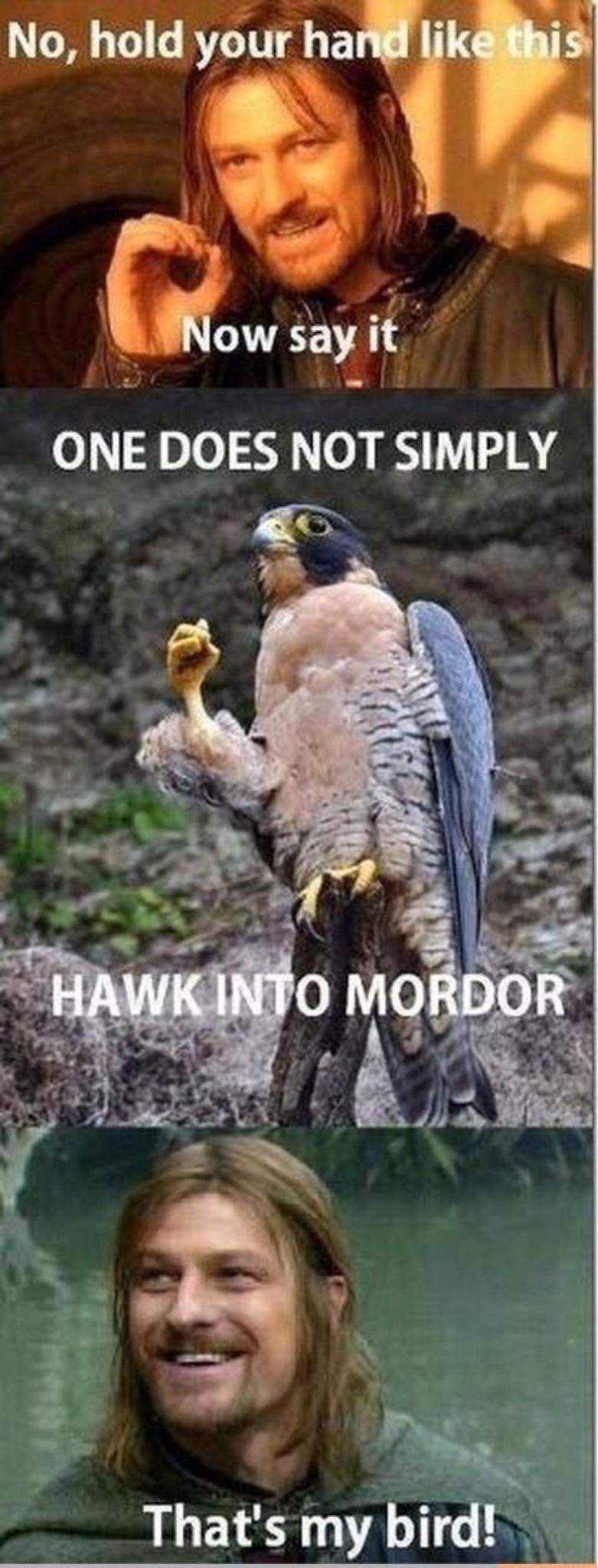 hawk - meme