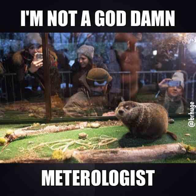 Groundhog Meteorologist - meme