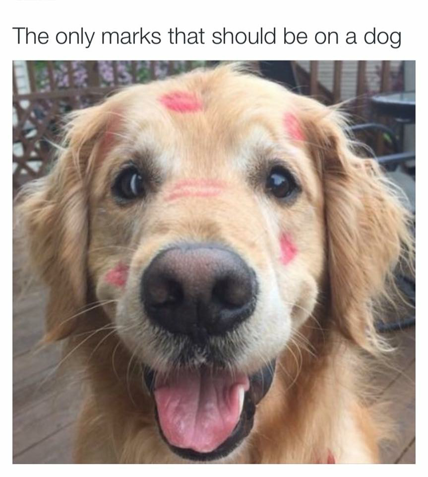 Marks that I leave on my own two puppies. MWAH! - meme