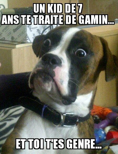 (Fait Casa) ptn rien qla tête du chien gt mort - meme