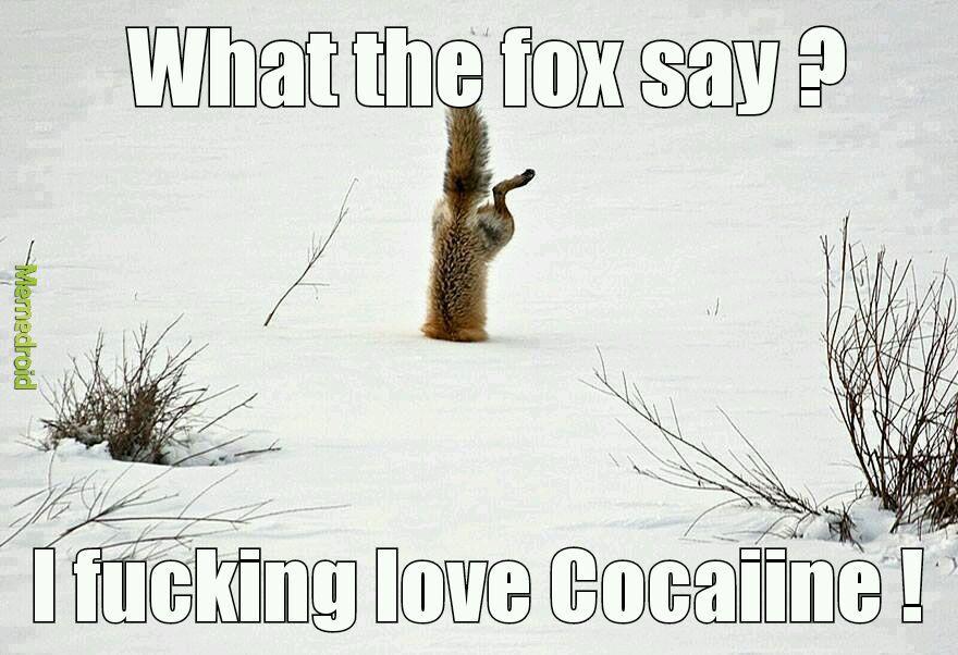 What the fox say - meme