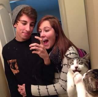 gato fotogenico - meme