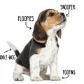 High quality dog anatomy!