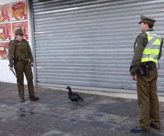 Seguridad en Chile :v - meme