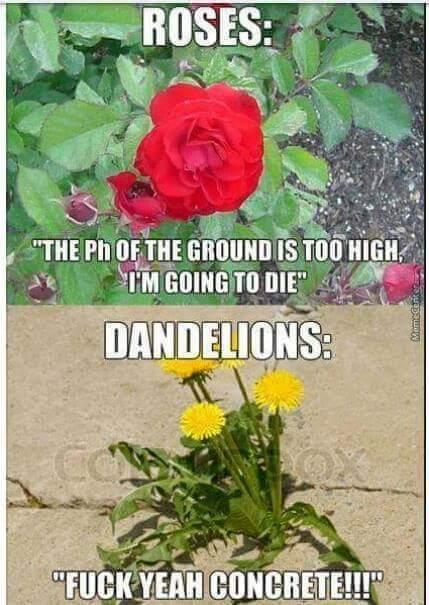 Gawd dawm weeds - meme