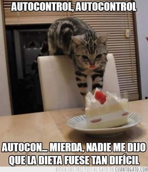 Dieta en vacaciones... es como querer bañar a un gato en una playa boliviana - meme