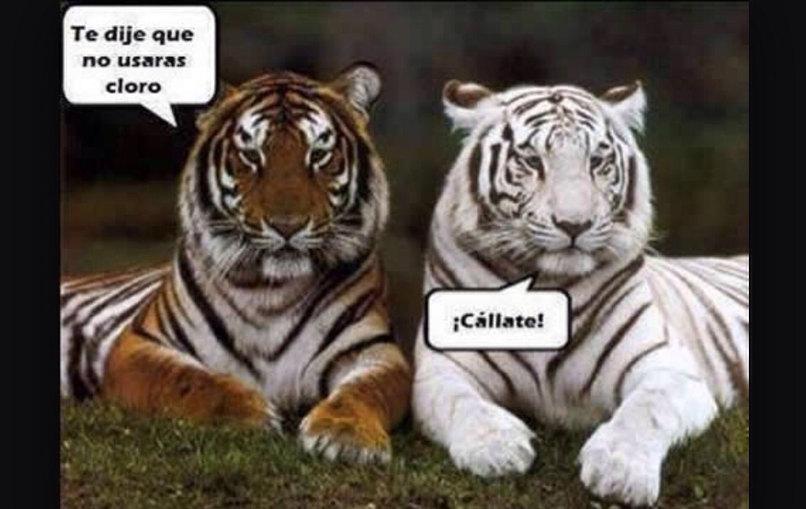 Cloro...:) - meme