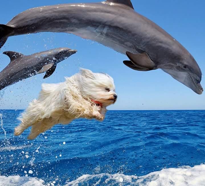 Kiki et les dauphins - meme