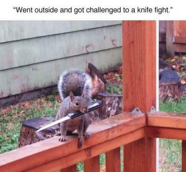 Get the squirrel king - meme