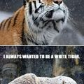 No one ever wants to be a black tiger...
