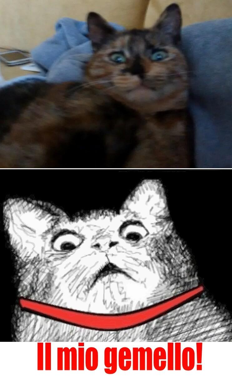 Si, quello è il mio gatto. - meme