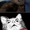 Si, quello è il mio gatto.