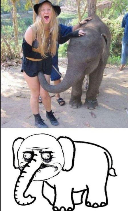 Elefante pervertido - meme