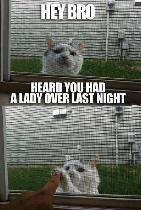 Kitty high five,seems legit - meme