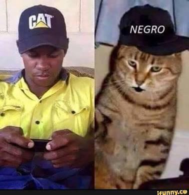 5639282231683 the best negro memes ) memedroid,Cat Negro Meme