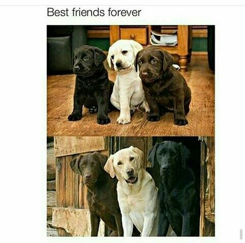 Best Friends Oreo - meme