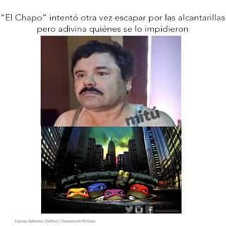Chapo - meme