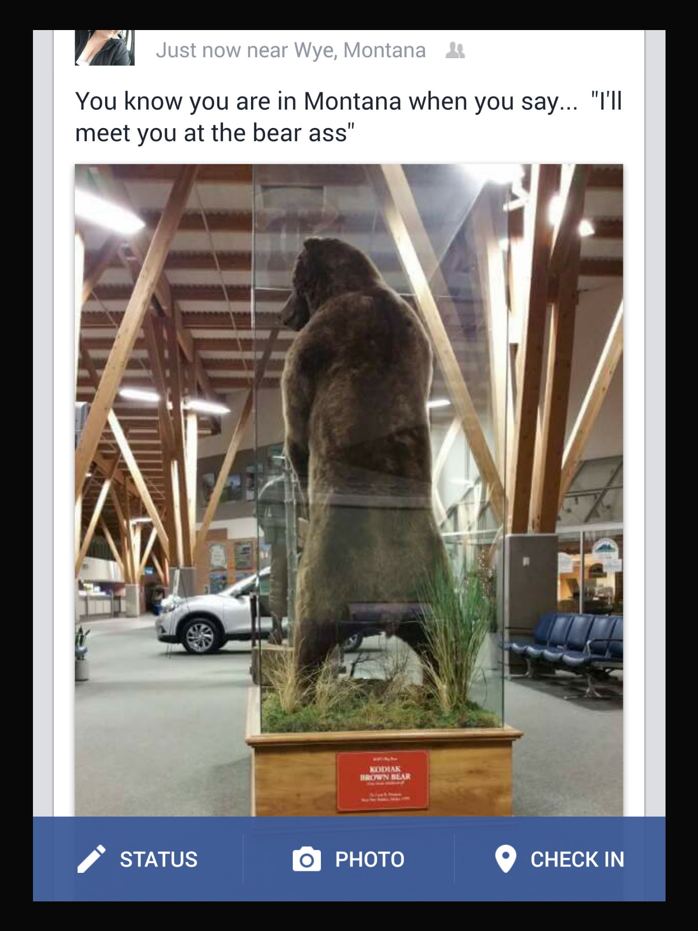 Wtf is the bear doing? - meme
