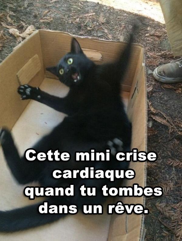 Le chat me tue x) - meme