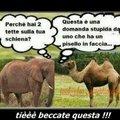 Cito Tuamamma99