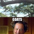 I've heard of Mountain Goats, but Tree goats?