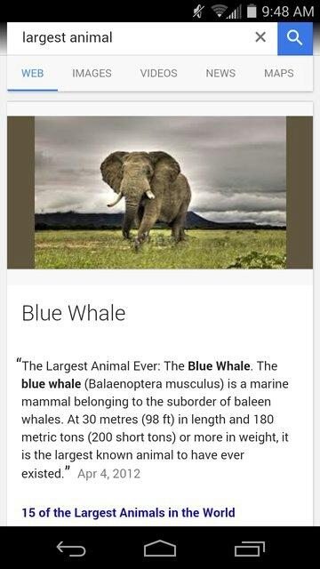 Blue whale - meme