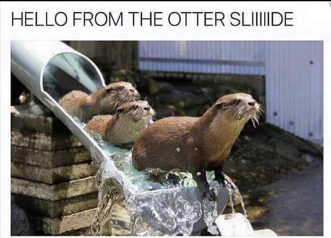 The Best Otter Memes Memedroid