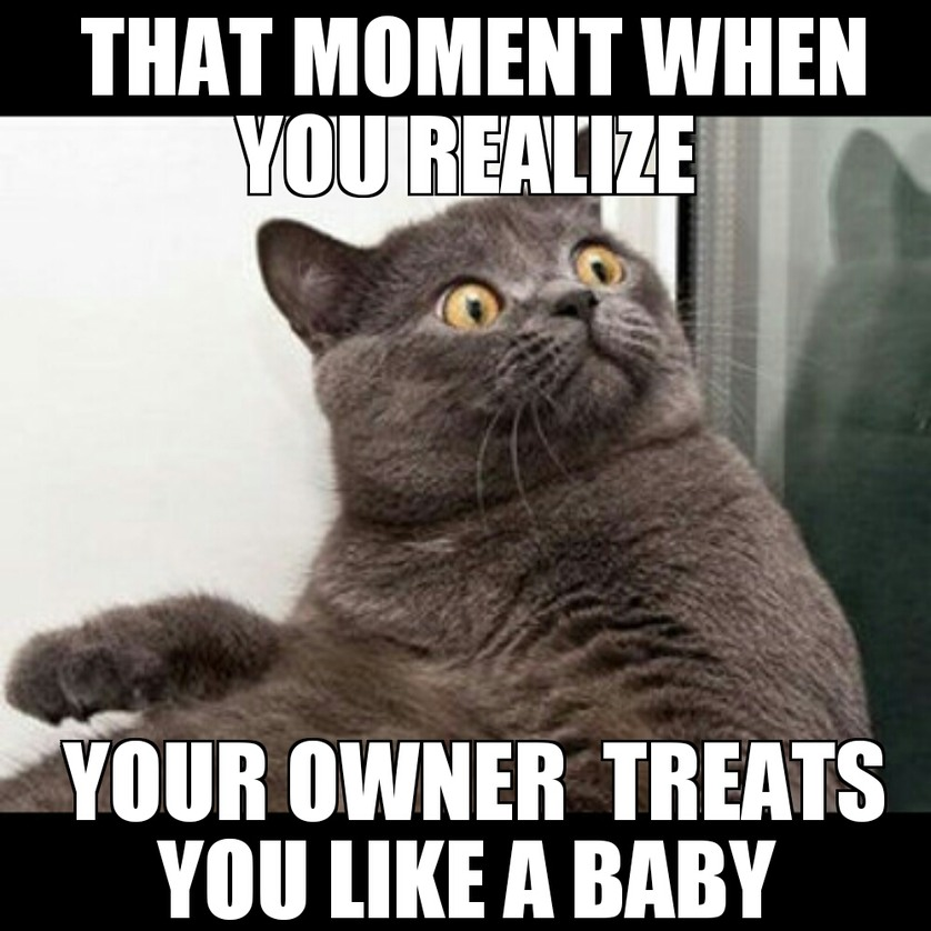 That moment when your cat realized - meme