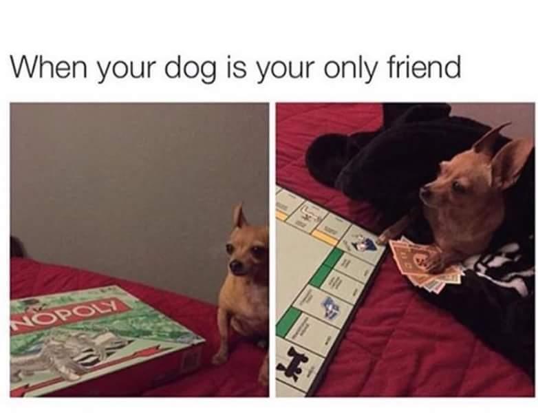 My dog is my best friend she loyal - meme