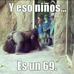 Jaja Gorilas lokillos - meme