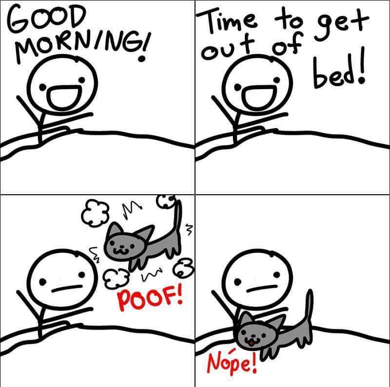 Damn kitties! - meme
