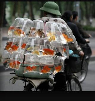 Marchant de poisson du bled - meme