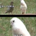 Preconceito animal
