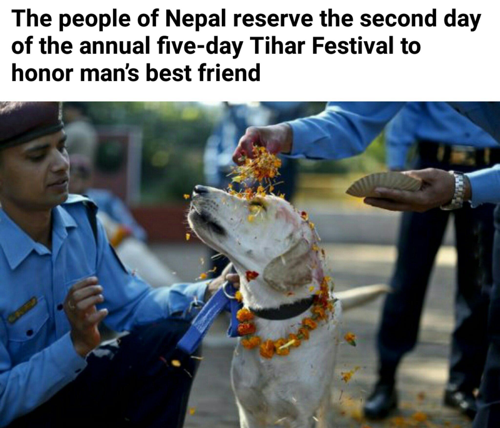 Man's best friend - meme