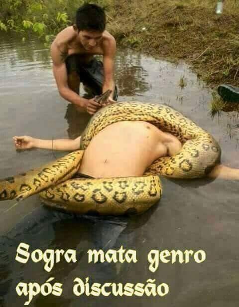 Sogra = cobra - meme