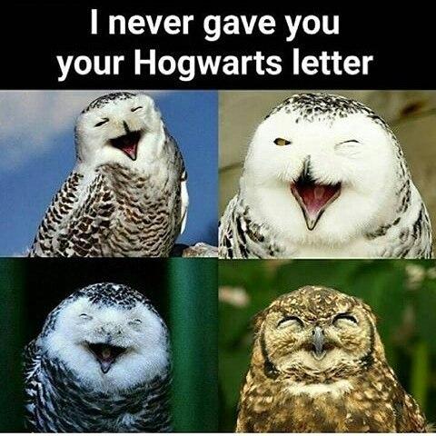 troll owl - meme