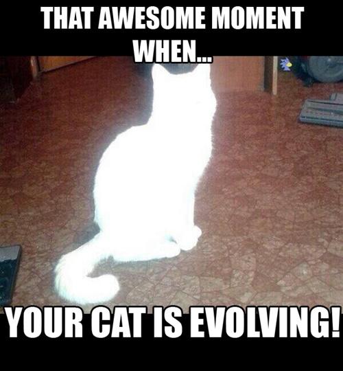 Ce moment merveilleux quand ton chat évolue - meme