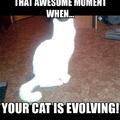 Ce moment merveilleux quand ton chat évolue