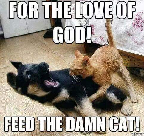 Feed himmmmmmm - meme