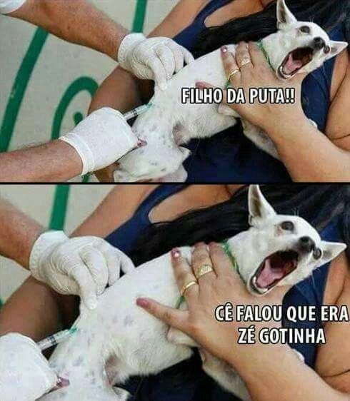 GOTINHA - meme