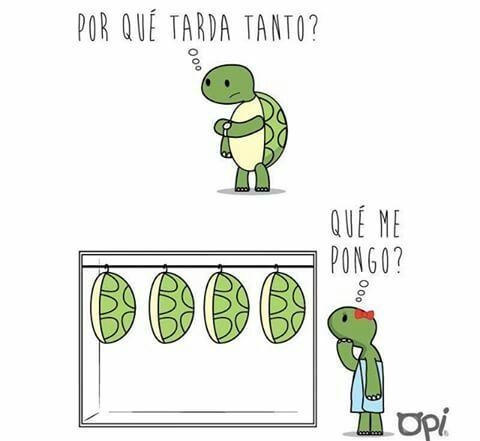 Tortugas XD sigueme y te sigo ;)) - meme