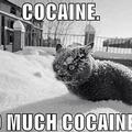 Cocaine everywhere jajajaja