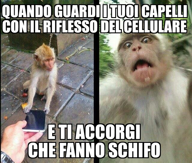 ScimmiaPatt - meme