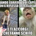 ScimmiaPatt