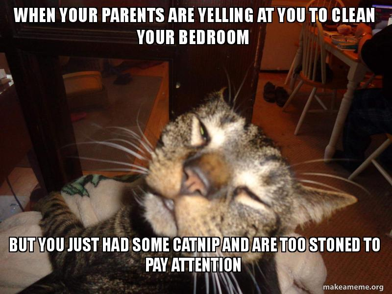When your parents are yelling at you but you just had some catnip and are too stoned to pay attention - meme