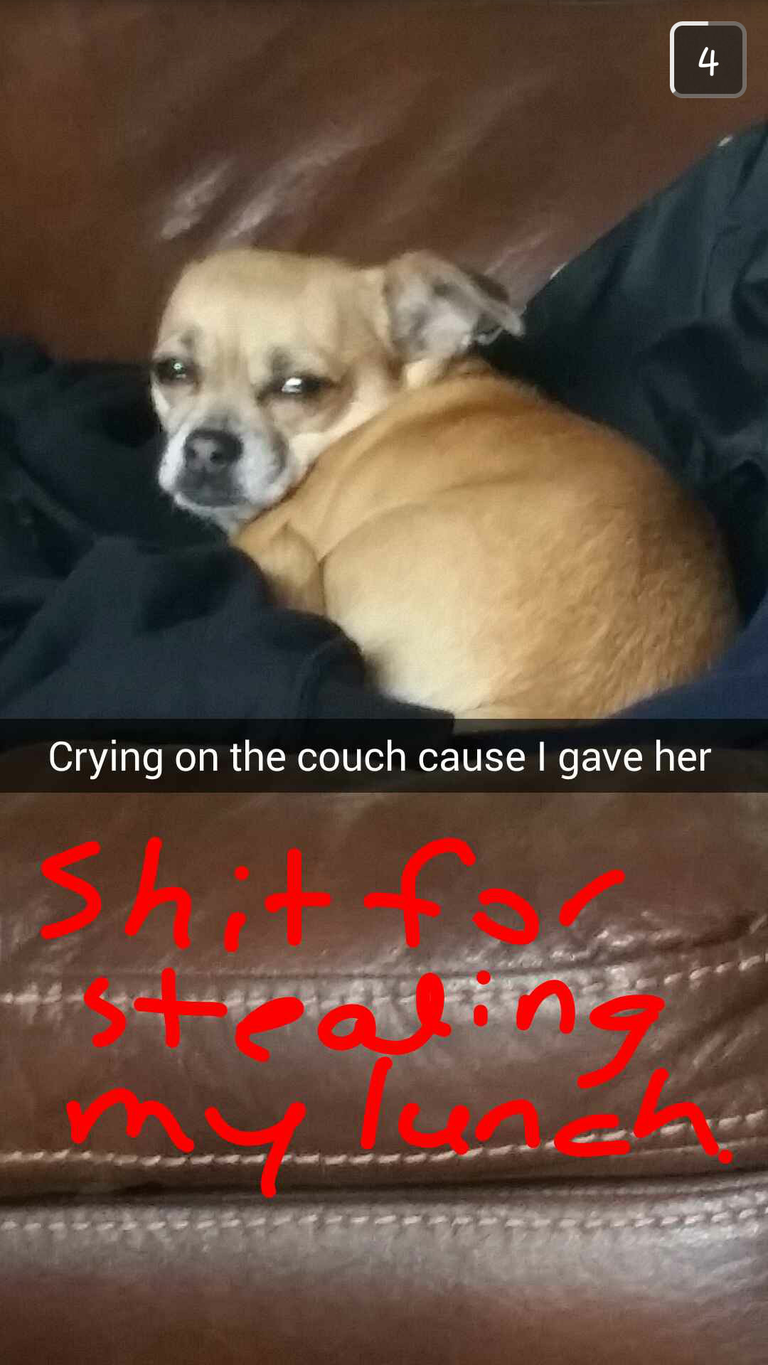 My sister's dog was not happy - meme