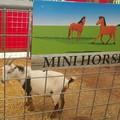 It's a goat!!!!!!