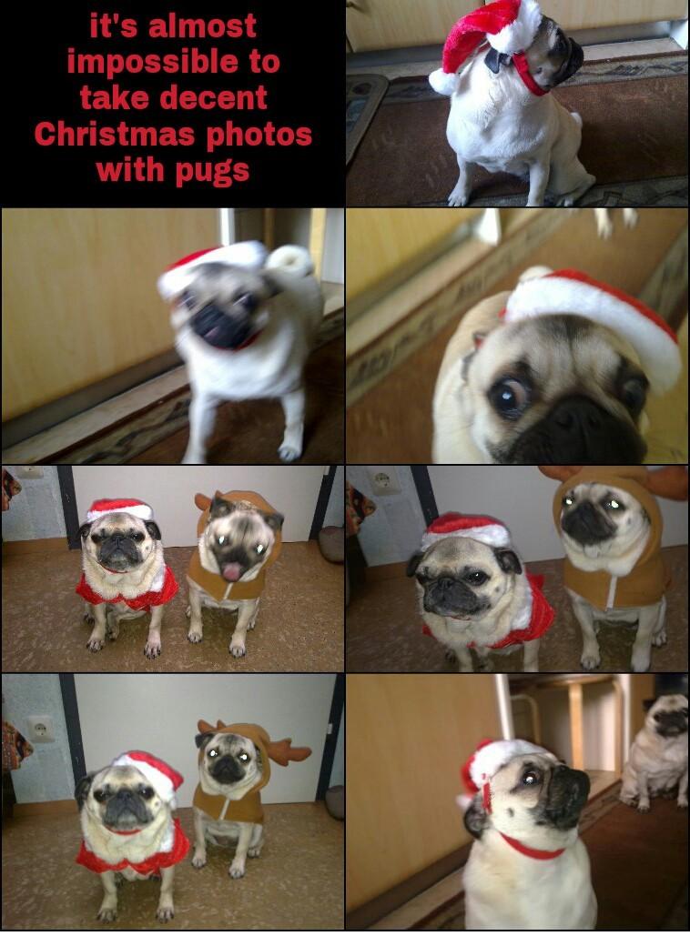 Merry Christmas Memedroid ♡