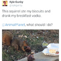 Savage squirrels