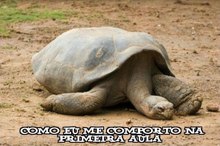 A tartaruga está sonhando com sua mãe Zzzzzz - meme
